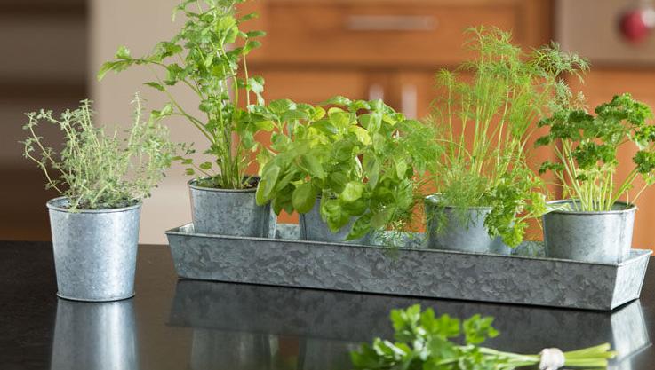 Best Herbs for Growing Indoors | Gardener's Supp