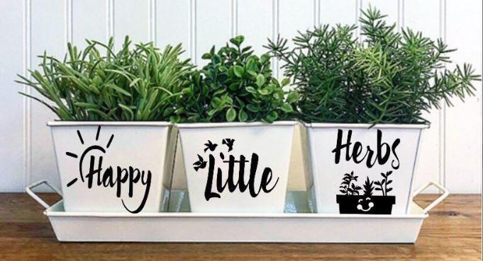 10 Important Tips to Create your own Indoor Herb Gard