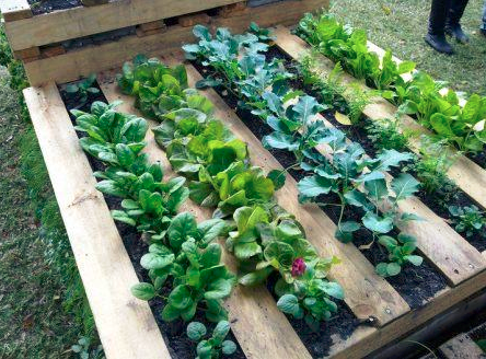 DIY Pallet Garden Instructions Will Deliver A Raised Bed In 3 Easy .