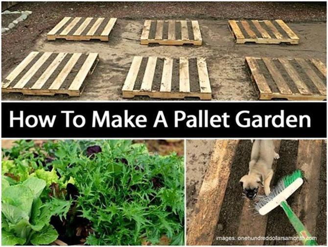 Pallet Gardening Ideas-DIYHowto Create A Pallet Garden (Video)02 .