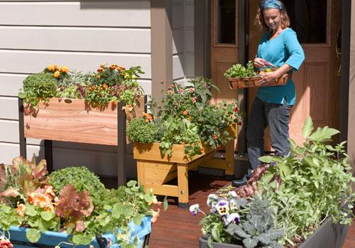 Create a Patio Vegetable Garden | Gardener's Supp