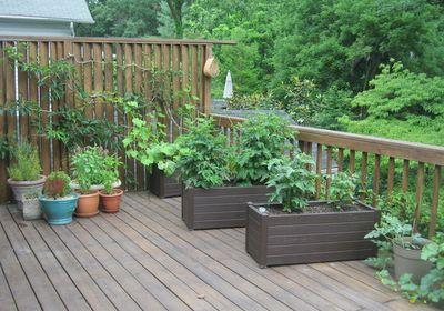 Eat Live Grow Paleo : Beautiful Patio Garde