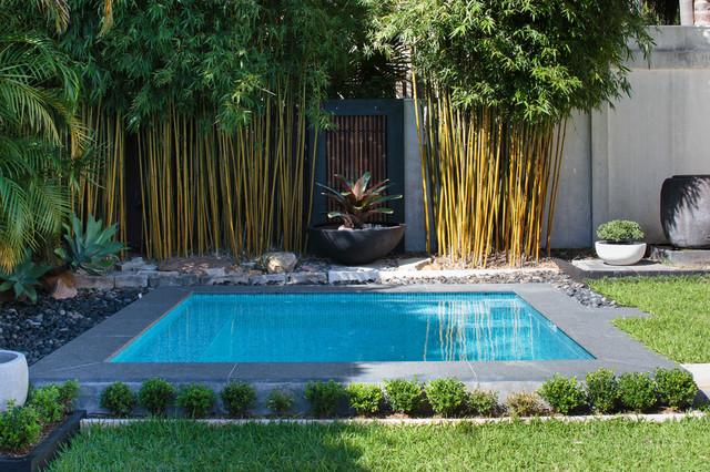 Roseville - Plunge Pool - Modern - Pool - Sydney - by Crystal Poo