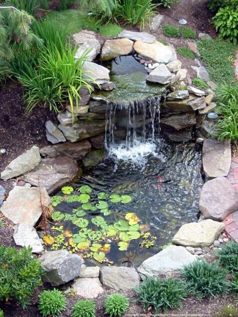 I really want a backyard pond that has a little waterfall with koi .