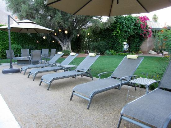 Pool Lounge Chairs - Picture of Desert Riviera Hotel, Palm Springs .