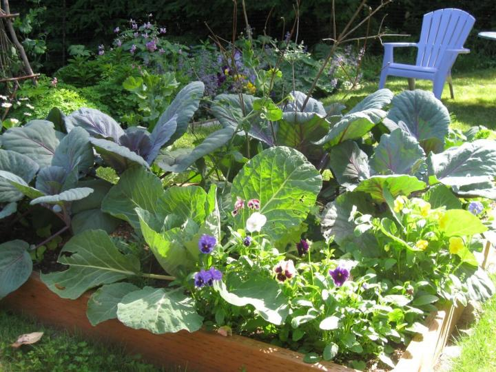 Raised Bed Garden Layout Plans | The Old Farmer's Alman