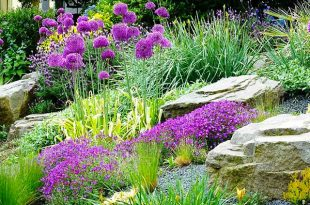 Plants for Rock Garden
