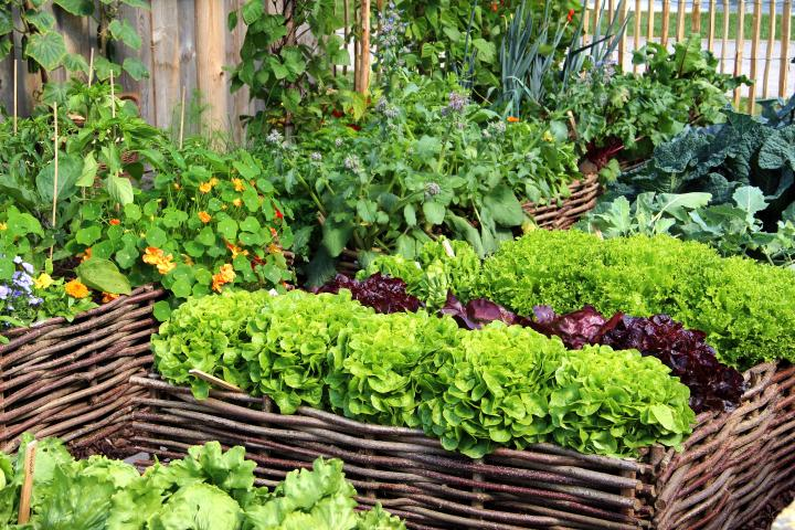 Four-Bed Crop Rotation for Small Gardens | Old Farmer's Alman