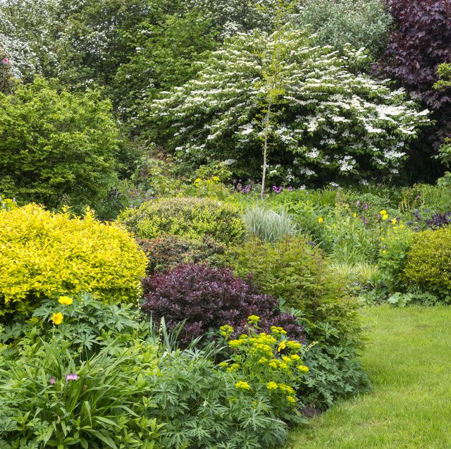 10 Best Trees for Small Gardens - Best Small Trees for Tiny Yar
