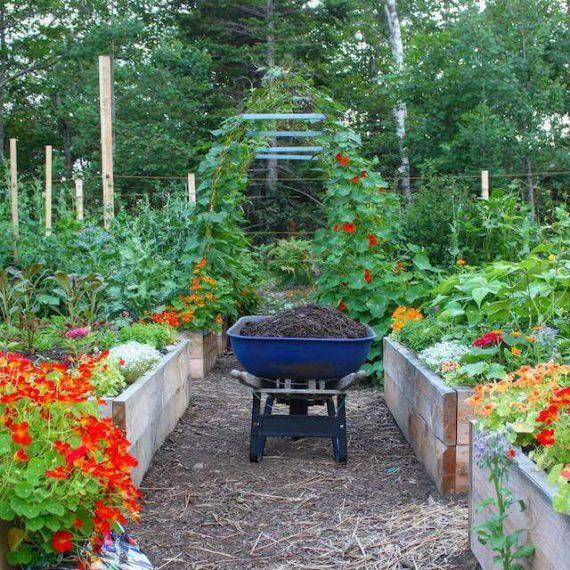 Starting a Home Vegetable Garden: Top Easy Tips⎢U