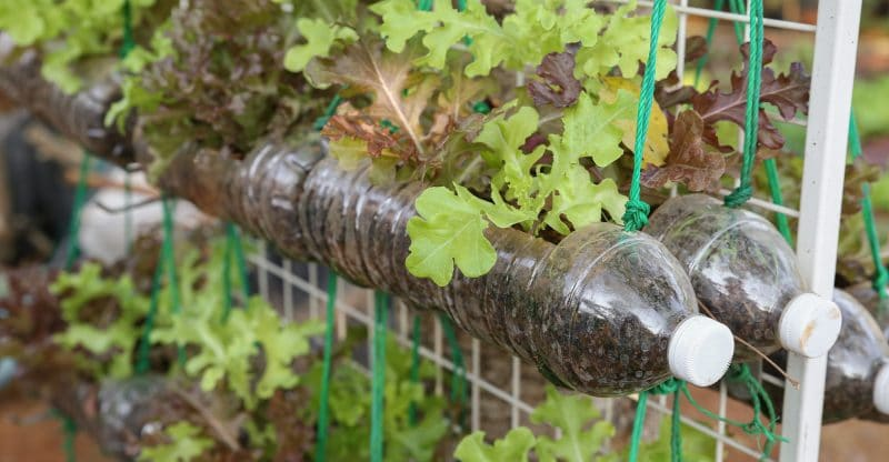 5 Vegetable Garden Ideas For Your Tiny Hou