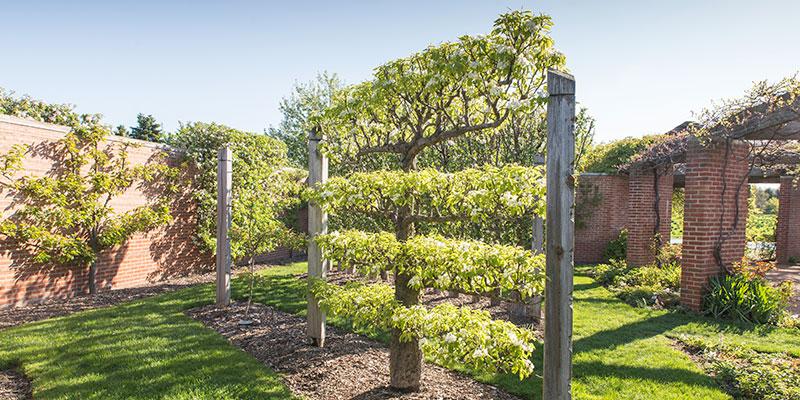 Regenstein Fruit & Vegetable Garden | Chicago Botanic Gard