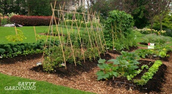 6 vegetable gardening tips every new food gardener needs to kn
