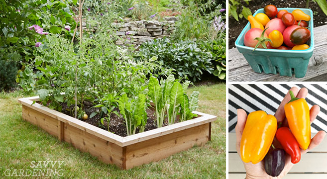 4x8 Raised Bed Vegetable Garden Layout Ideas: What to Sow & Gr
