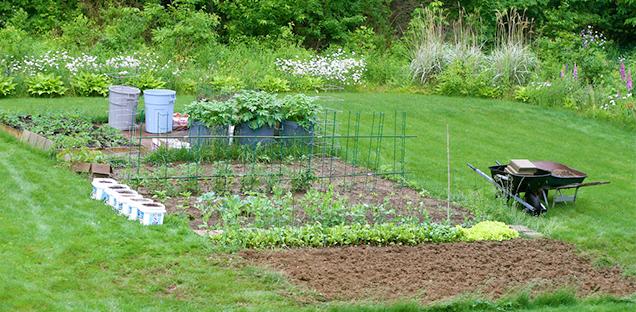 Design A Vegetable Gard