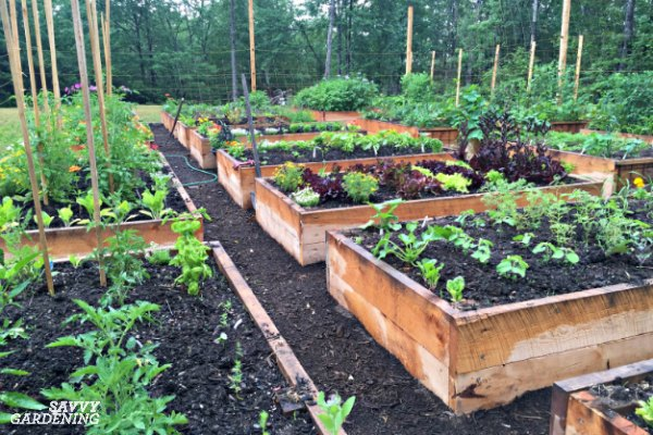 A Vegetable Garden Planner for High Yields & Healthy Plan