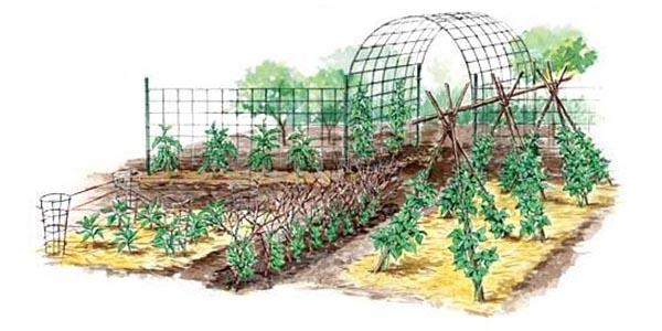 Vertical Gardening Techniques for Maximum Returns | MOTHER EARTH NE