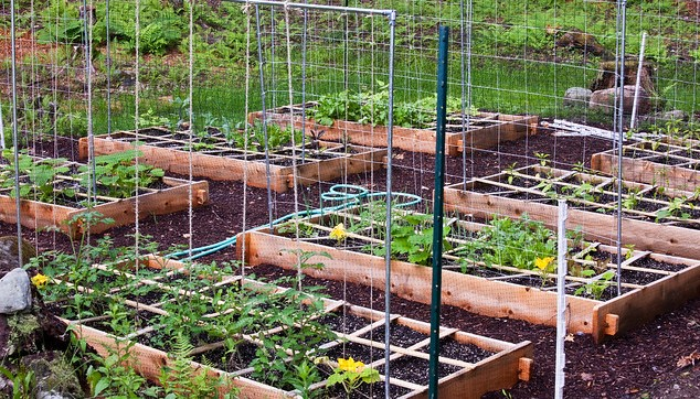 Vertical Gardening Workshop | Morning Ag Cli